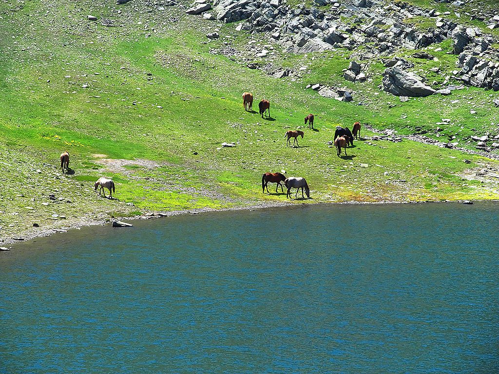 Horses by the Teardrop Lake